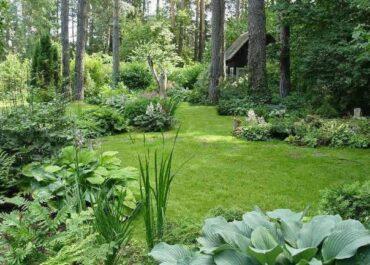 Лесной дизайн